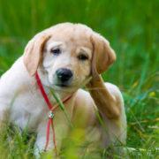 How to Keep Dogs Flea-Free