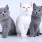 Best Deals on Cat Litter