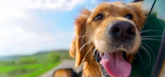 Discount Pet Medication: Best Places to Save Big