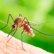 We Could Use Genetic Modification to Wipe Out Malaria: Should We?