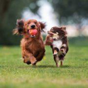 Best Dog Food Brands for Discerning Owners