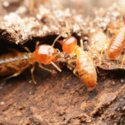 Know the Signs of Termites