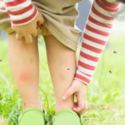 Buzz Off: Stopping Mosquitoes from Ruining Your Summer Fun
