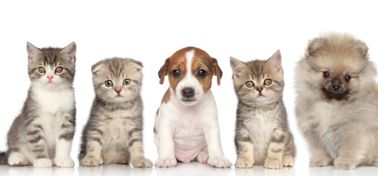 Review: Top 5 Pet Food Delivery Services-