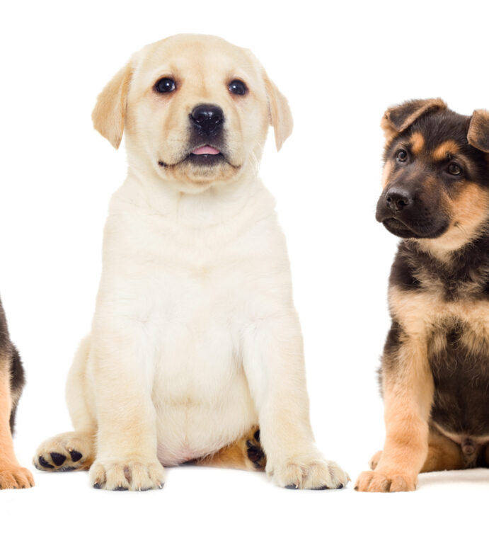 Review: Choose the Right Flea Medication for Your Dog
